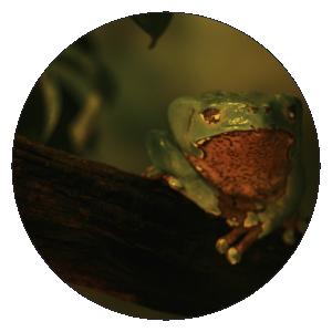 animalix-frosch