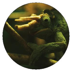animalix-kakamel