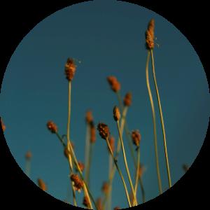floralix-bitzweger