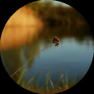 floralix-frühling