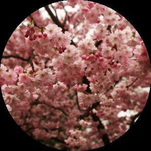 floralix-hham