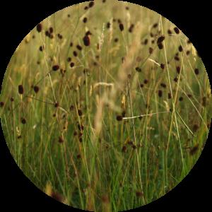 floralix-knöpfe