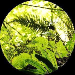 floralix-slowenien